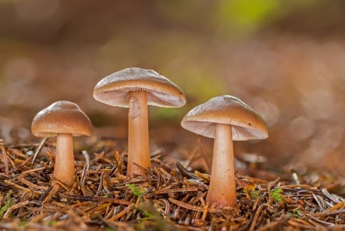 Stimuli, les champignons et leurs secrets